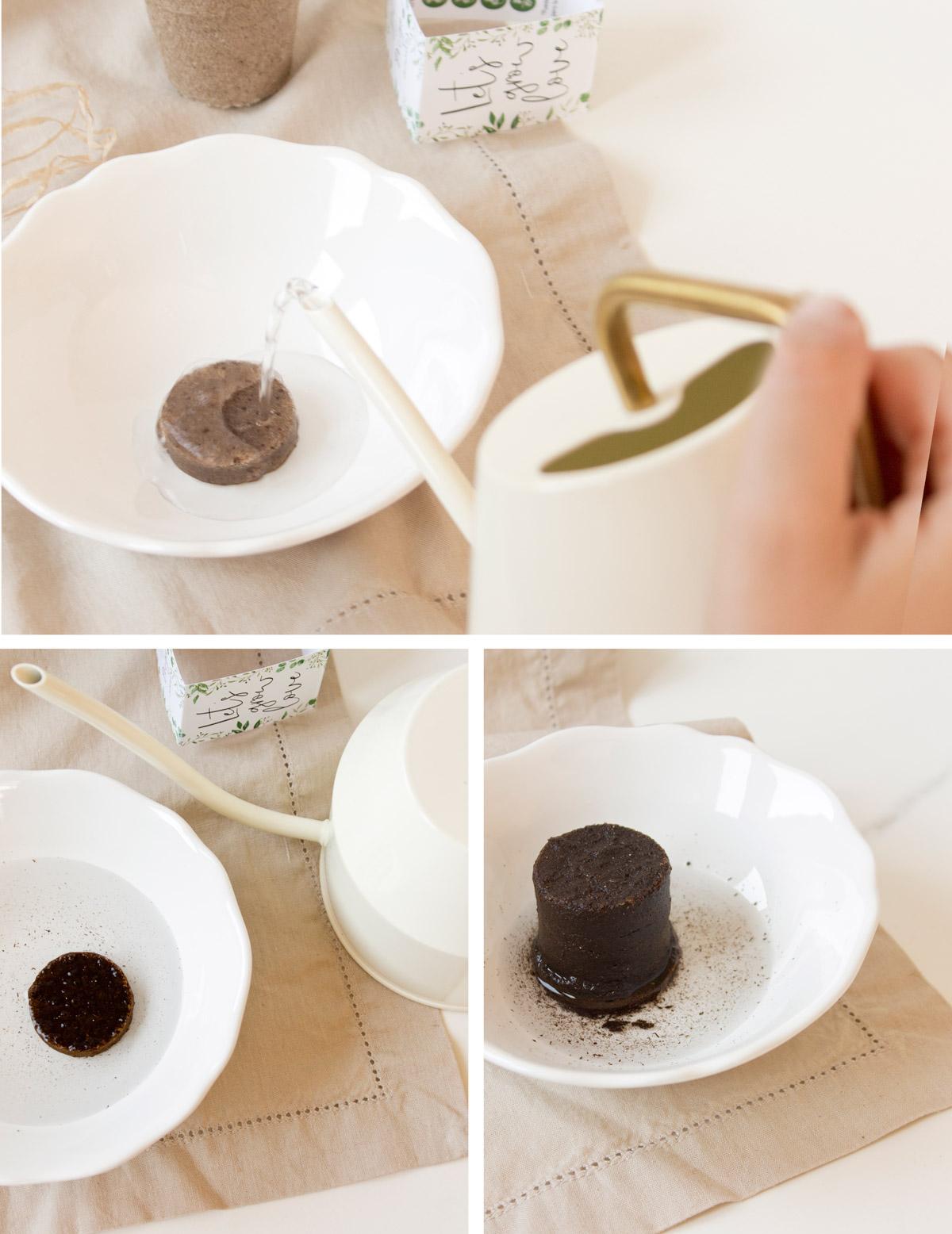 Kit de semillas para invitados