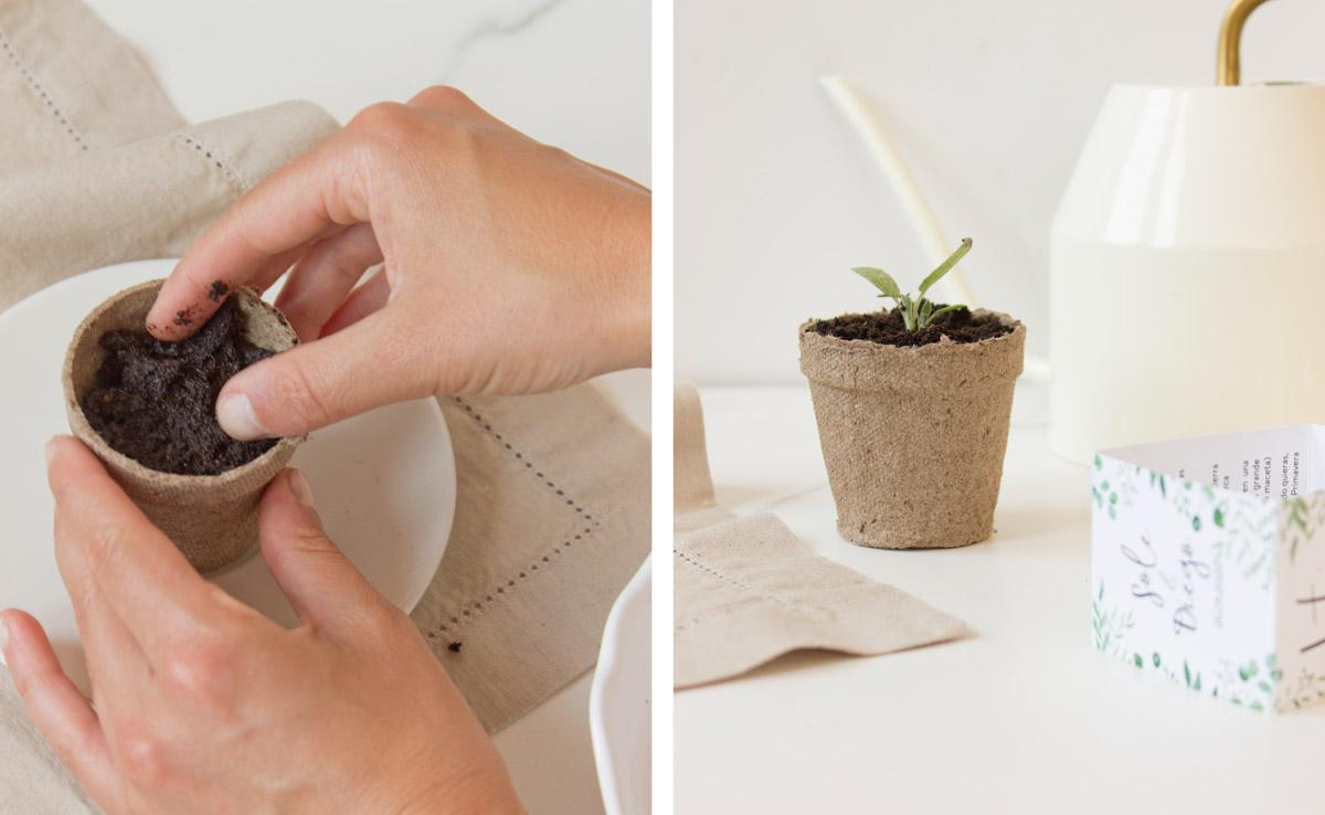 Kit de semillas para invitado