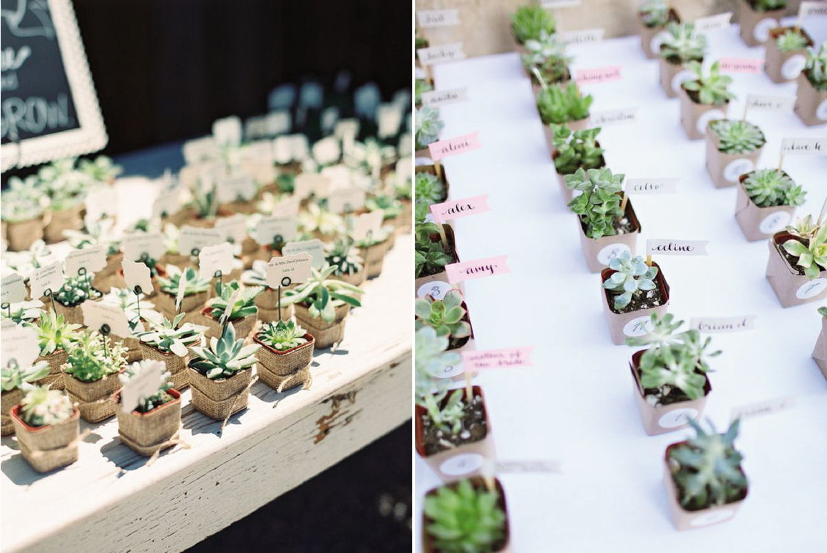 07-Como-regalar-plantas-y-semillas-a-invitados-boda