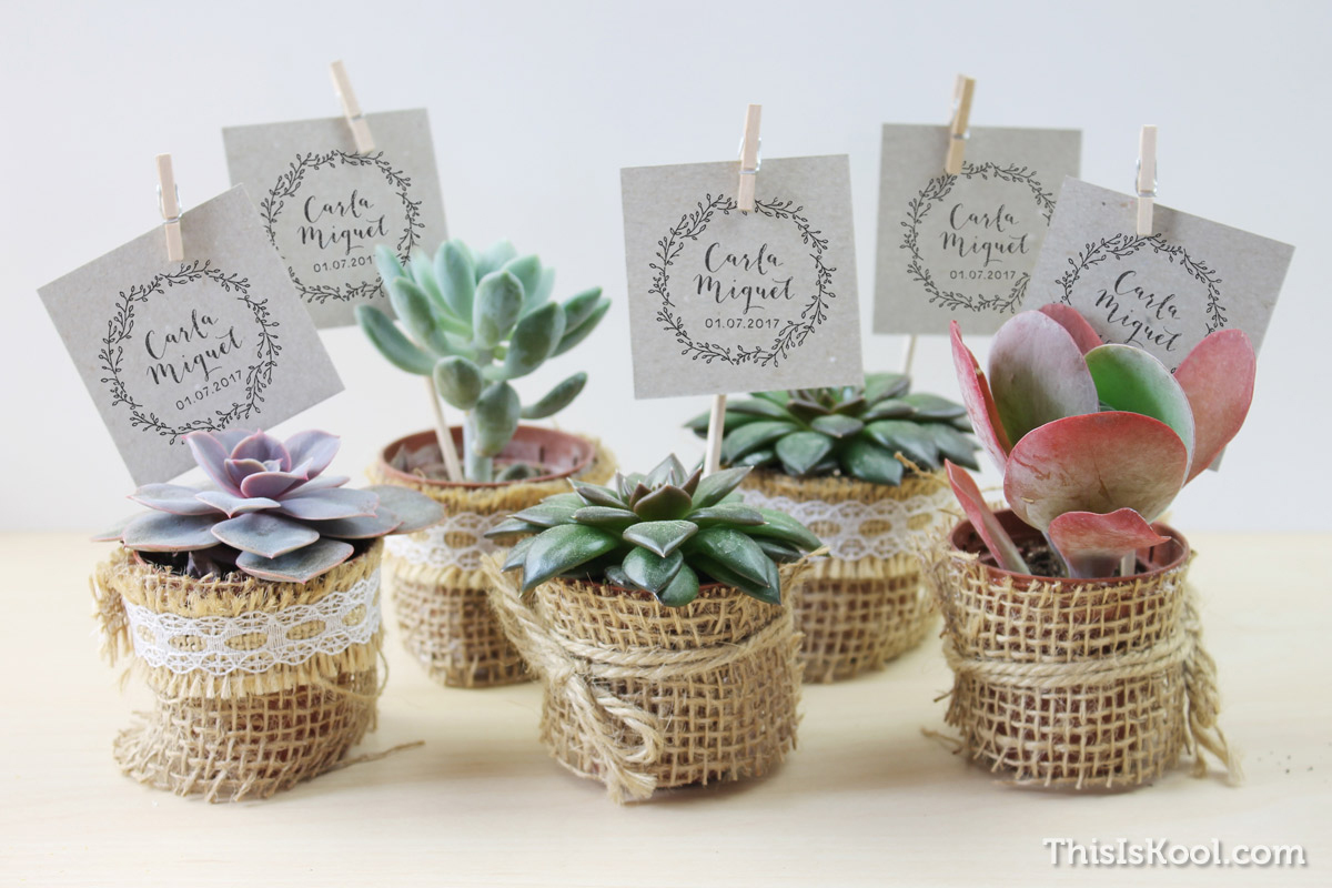 C mo regalar plantas y semillas a los invitados el blog de this is kool - Que regalar en una boda ...