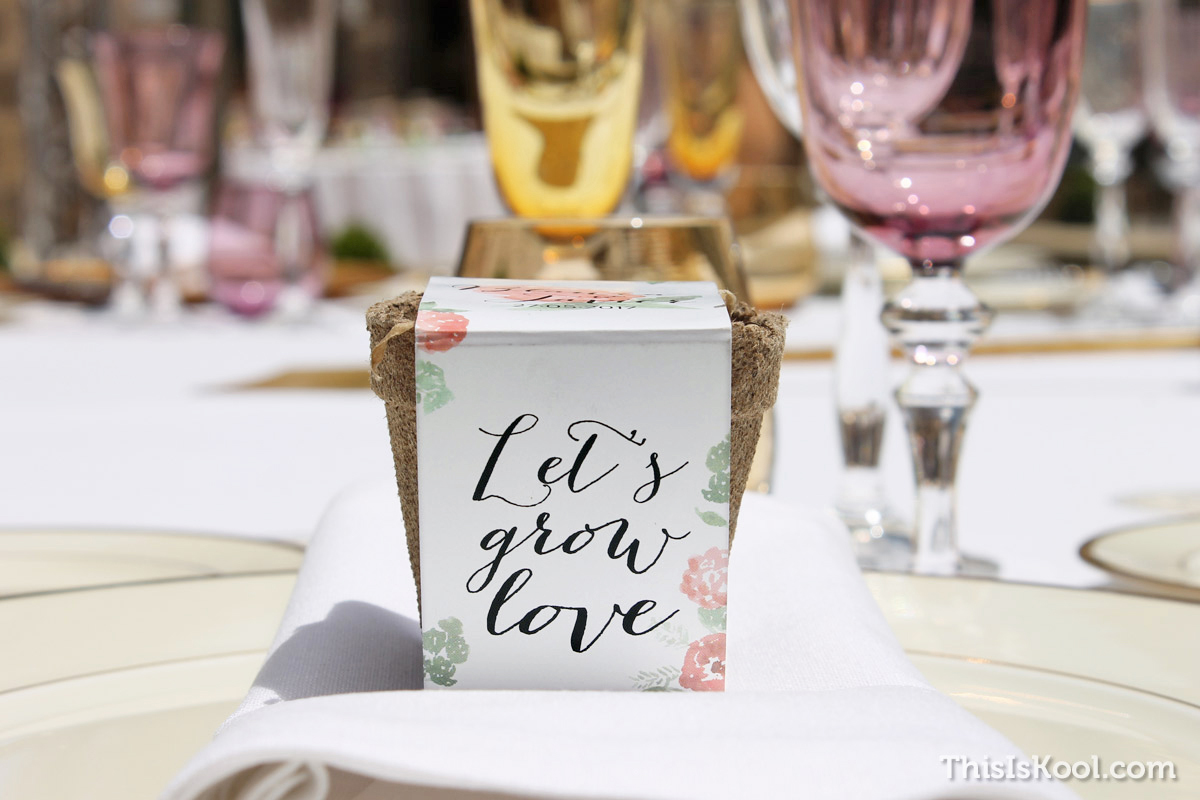 16-Como-regalar-plantas-y-semillas-a-invitados-boda
